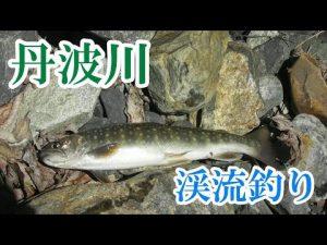 山梨県、丹波川で渓流釣り!