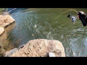 山奥の川でルアー釣り